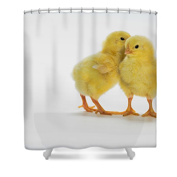 Yellow Chicks. Baby Chickens Shower Curtain by Thomas Kitchin & Victoria Hurst
