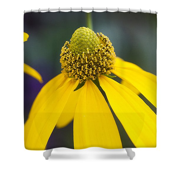 Yellow Coneflower Rudbeckia Shower Curtain by Rich Franco