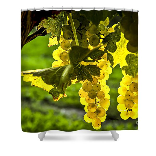 Yellow grapes in sunshine Shower Curtain by Elena Elisseeva