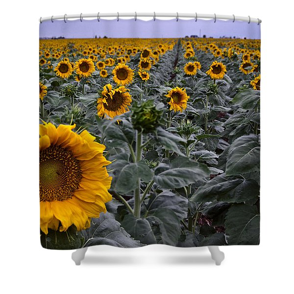 Yellow Sunflower Field Shower Curtain by Dave Dilli