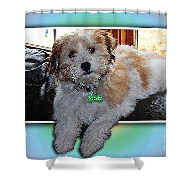 YOSHI Havanese Puppy Shower Curtain by Barbara Griffin