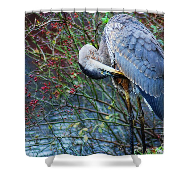 Young Blue Heron Preening Shower Curtain by Paul Ward