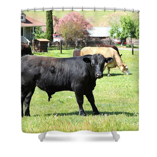 Young Bull Home On The Ranch At The Black Diamond Mines in Antioch California 5D22349 Shower Curtain by Wingsdomain Art and Photography
