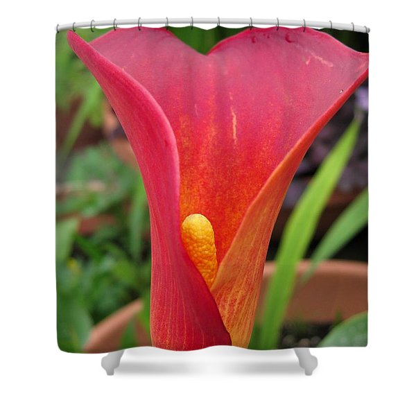 Zantedeschia Named Red Sox Shower Curtain by J McCombie