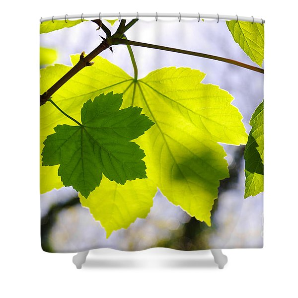 Green Leaves Shower Curtain by Carlos Caetano