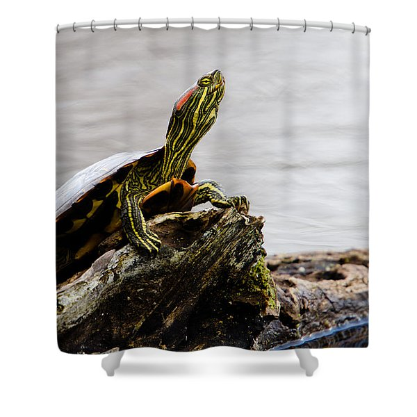King of the Log Shower Curtain by Jason Smith