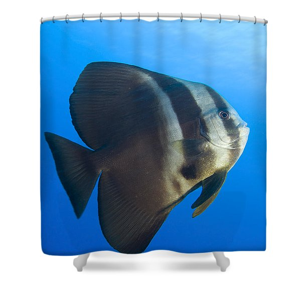 Longfin Spadefish, Papua New Guinea Shower Curtain by Steve Jones