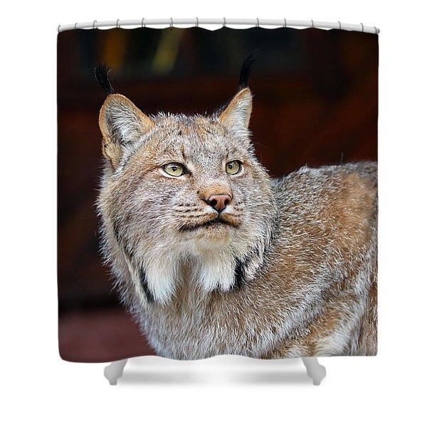 North American Lynx Shower Curtain by Paul Fell
