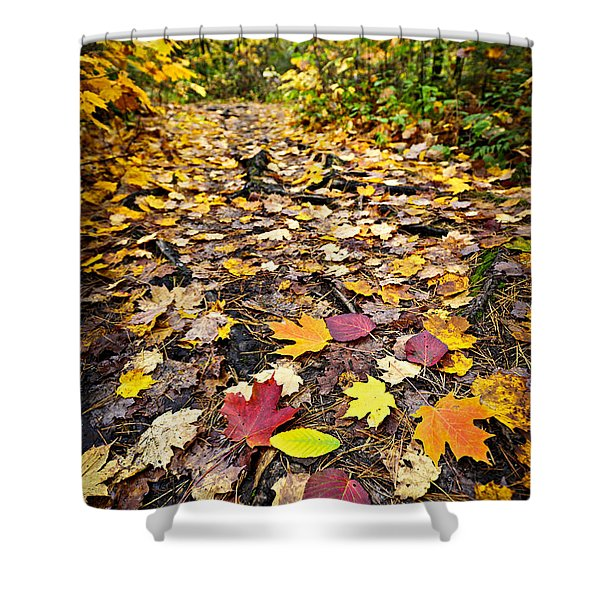 Path in fall forest Shower Curtain by Elena Elisseeva