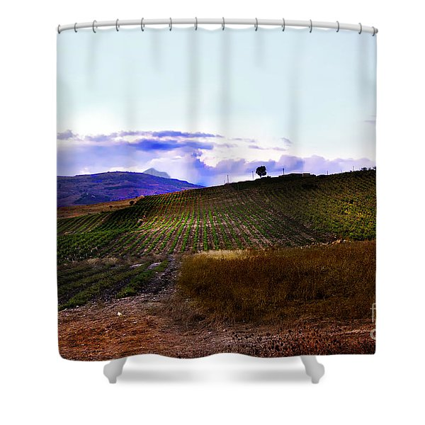Wine Vineyard in Sicily Shower Curtain by Madeline Ellis