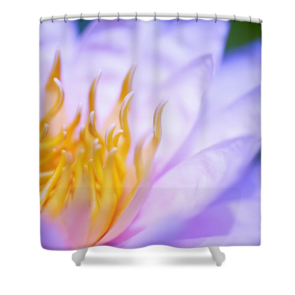 Shower Curtain by Kicka Witte