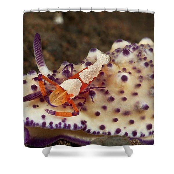 Nudibranch With Orange Emperor Shrimp Shower Curtain by Mathieu Meur