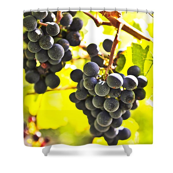 Red grapes Shower Curtain by Elena Elisseeva