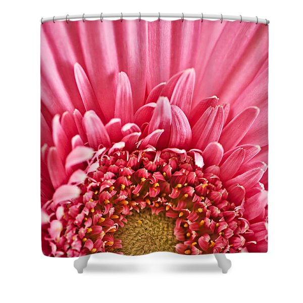 Gerbera Flower Shower Curtain by Elena Elisseeva