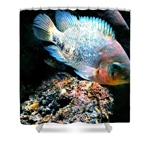 Fish living in Denmark Shower Curtain by Colette V Hera  Guggenheim