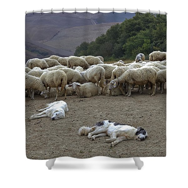 flock of sheep Shower Curtain by Joana Kruse