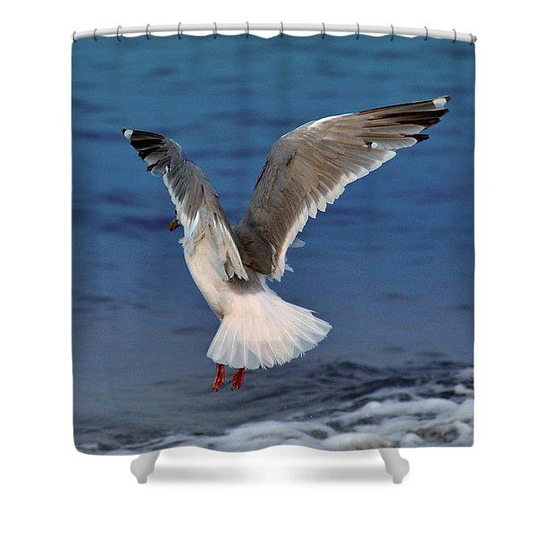 Seagull  Shower Curtain by Debra  Miller