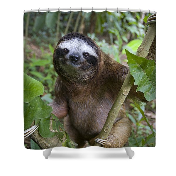 Brown-throated Three-toed Sloth Shower Curtain by Suzi Eszterhas