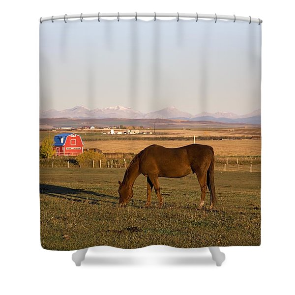 A Brown Horse Grazing In A Field In Shower Curtain by Michael Interisano