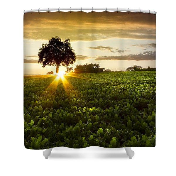 A Golden Evening  Shower Curtain by Debra and Dave Vanderlaan