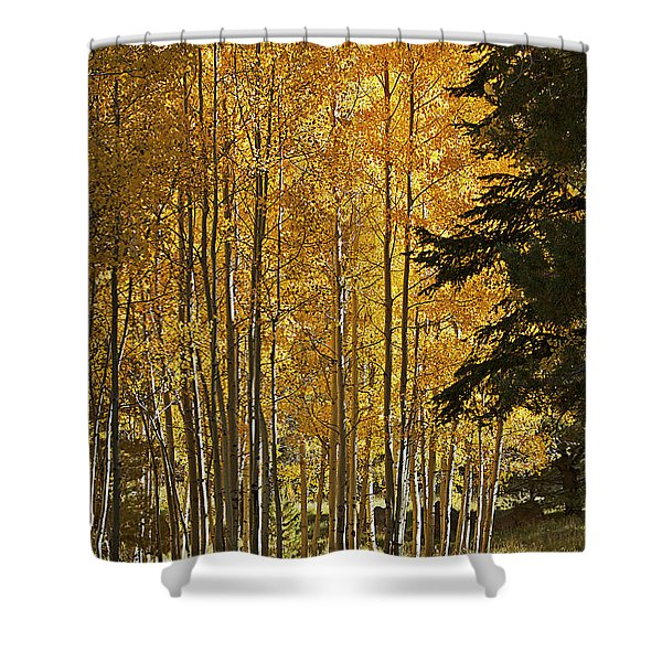 A Golden Trail Shower Curtain by Phyllis Denton