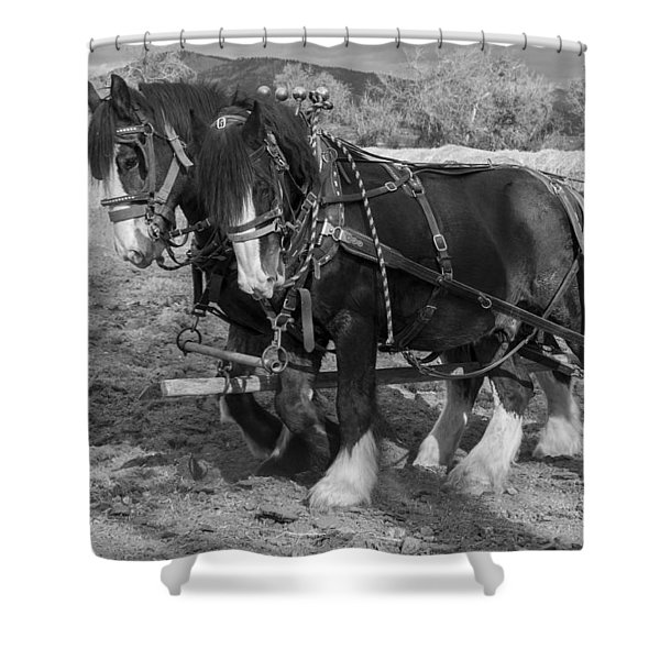 A Pair Of Shire Horses Shower Curtain by Fran Riley