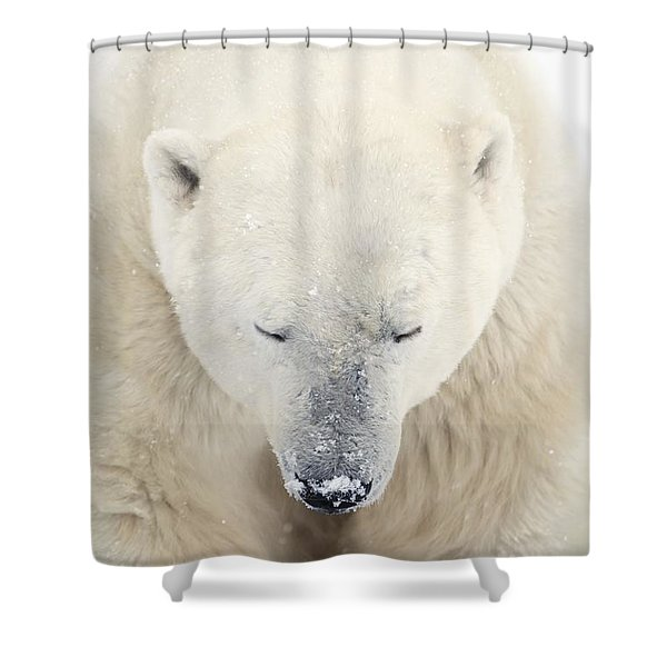 A Polar Bear Ursus Maritimus Resting Shower Curtain by Richard Wear