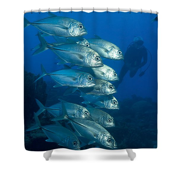 A School Of Bigeye Trevally, Papua New Shower Curtain by Steve Jones