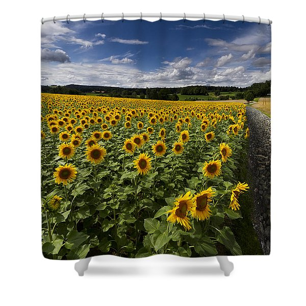 A Sunny Sunflower Day Shower Curtain by Debra and Dave Vanderlaan