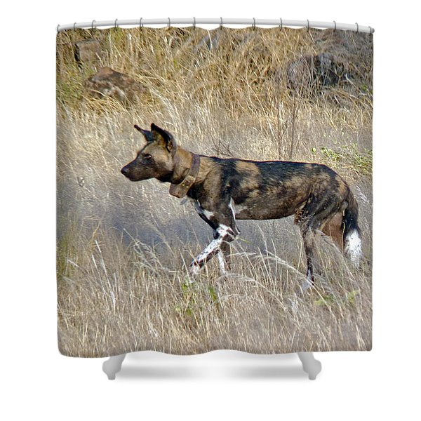 African Wild Dog Shower Curtain by Tony Murtagh