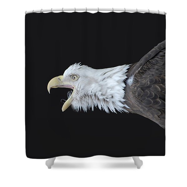 American Bald Eagle Shower Curtain by Paul Ward