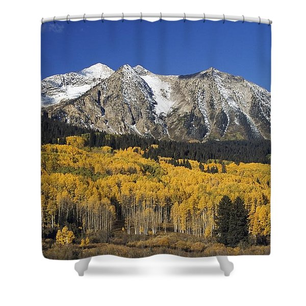 Aspen Trees In Autumn, Rocky Mountains Shower Curtain by David Ponton