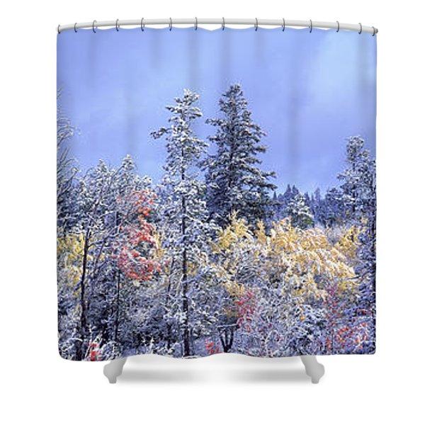 Aspens In Fall With Snow, Near 100 Mile Shower Curtain by David Nunuk