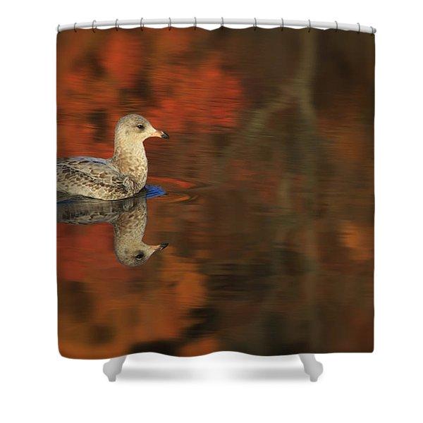 Autumn Gull Shower Curtain by Karol  Livote