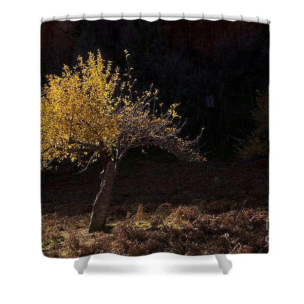 Autumn Light Shower Curtain by Mike  Dawson