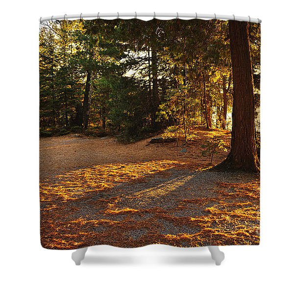 Autumn Trees Near Lake Shower Curtain by Elena Elisseeva