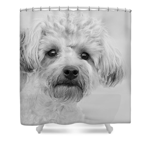 Awesome Abby The Yorkie-poo Shower Curtain by Kathy Clark