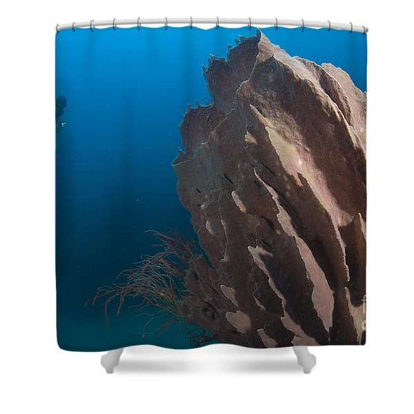Barrel Sponge And Diver, Papua New Shower Curtain by Steve Jones