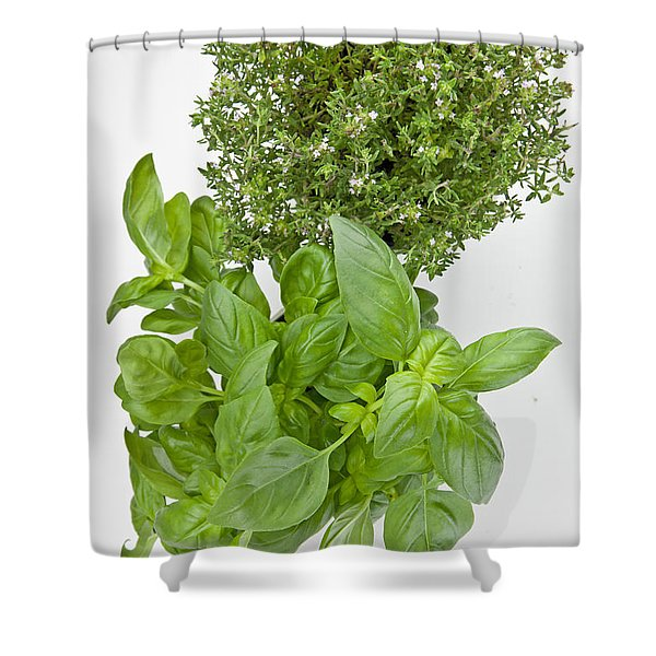 Basil and thyme Shower Curtain by Joana Kruse