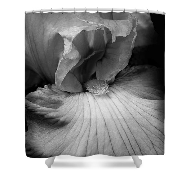 Bearded Iris Flower Black And White Shower Curtain by Jennie Marie Schell