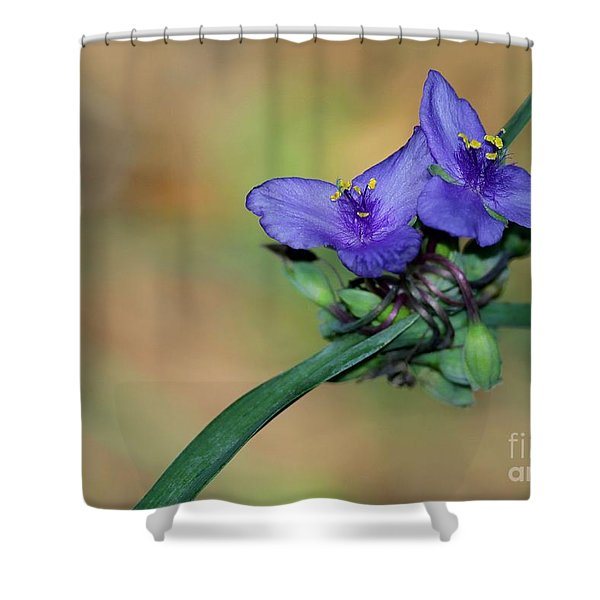 Beautiful Spiderwort Shower Curtain by Sabrina L Ryan