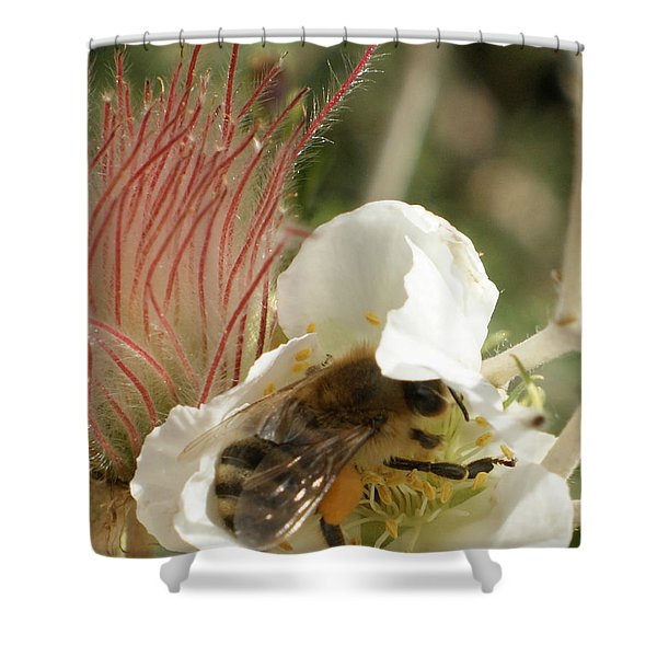 Bee Break Shower Curtain by Ernie Echols
