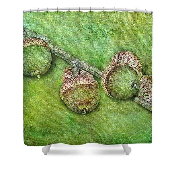 Big Oaks from Little Acorns Grow Shower Curtain by Judi Bagwell