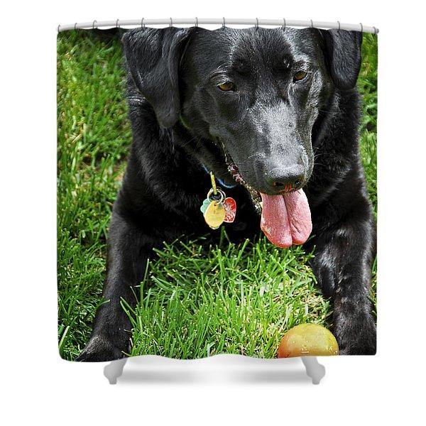Black lab dog with a ball Shower Curtain by Elena Elisseeva