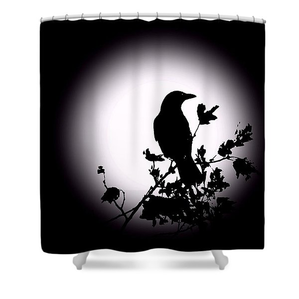 Blackbird in Silhouette  Shower Curtain by David Dehner