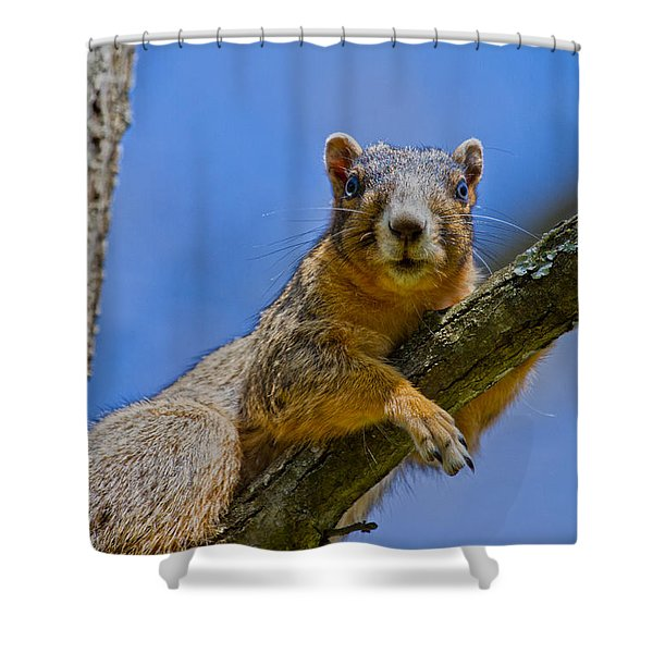 Blue Eyes Shower Curtain by Betsy C  Knapp