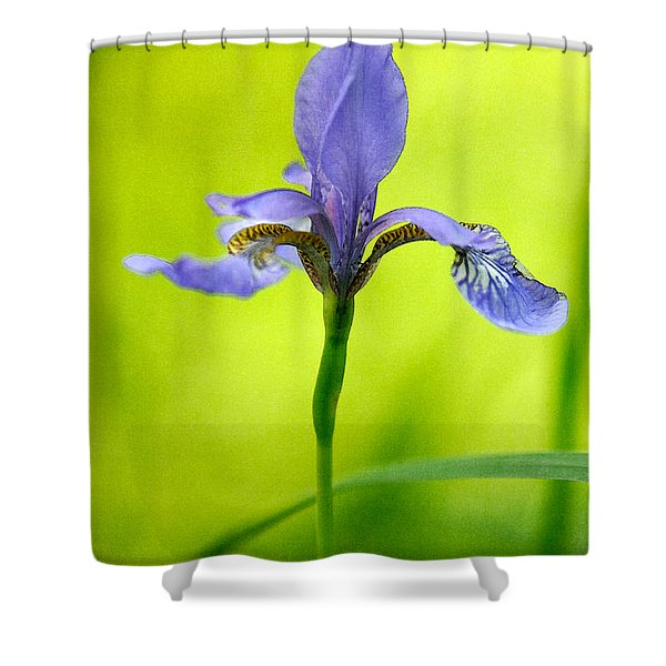 Blue Japanese Iris Shower Curtain by Lois Bryan