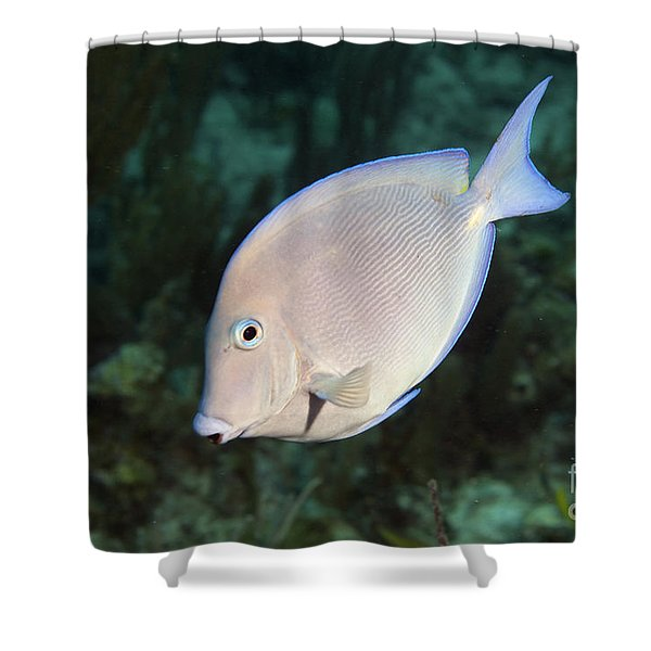 Blue Tang On Caribbean Reef Shower Curtain by Karen Doody