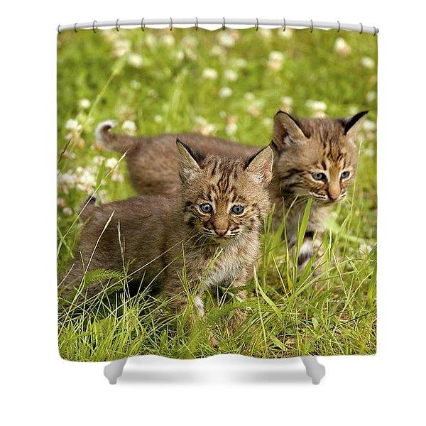 Bobcat Kittens Shower Curtain by John Pitcher