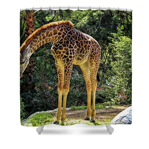 Bowing Giraffe Shower Curtain by Mariola Bitner
